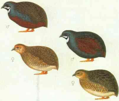 afbeeldingen vogels china